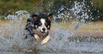 Bekannte Vorurteile über Hunderassen