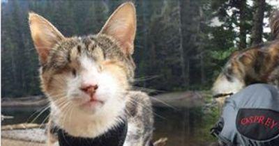 Nach schweren Zeiten kann die blinde Katze Honey Bee wieder ein glückliches Leben führen