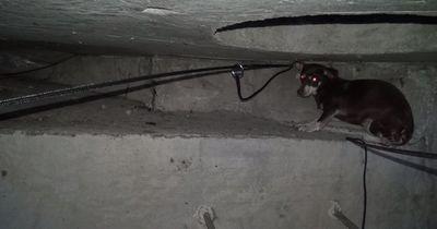 Sie fanden einen obdachlosen Hund im Abwasserkanal!