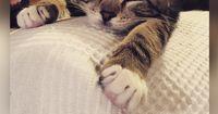 10 Katzen, die wirklich noch ihre 5 Minuten brauchen!