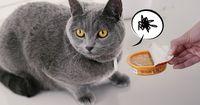 12 brummige Katzen, die man gesehen haben muss!