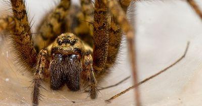 Spinnen sind nicht immer brav