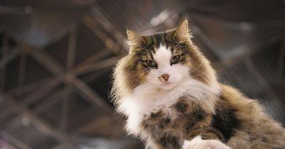 5 hilfreiche Tipps für Katzenhalter