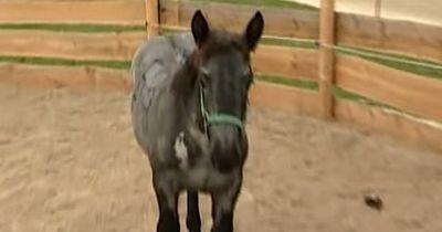 Dieses junge Pferd wurde vor dem Schlachter gerettet und war doch tottraurig