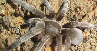 Habt ihr Angst vor Spinnen?  Dann kommt nicht nach Maningrida!