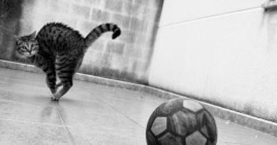 Katzen sind verrückt nach Fussball