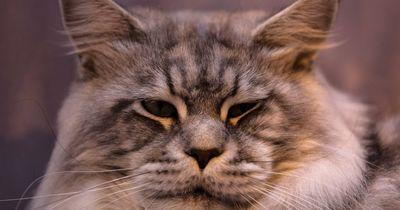 Diese kleine Katze kann nicht nur miauen!