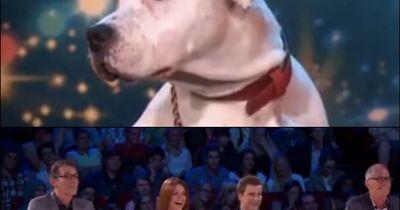 Belgiens neues Supertalent: Dieser Hund bringt Jury und Zuschauer außer Rand und Band.