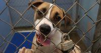 Warum es sich lohnt, einen Hund aus dem Tierheim zu adoptieren.