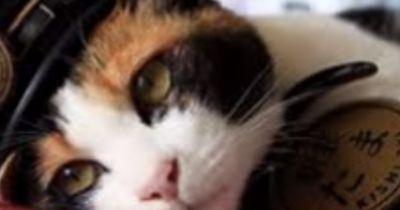 Warum gehen in Japan 3000 Menschen auf die Beerdigung einer Katze?