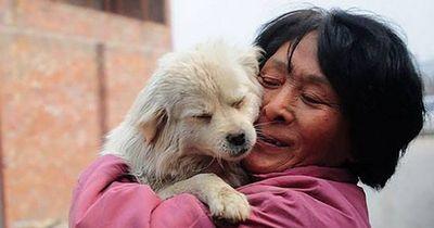 Wahre Heldin: Sie fährt 2400 Kilometer zum chinesischen Hundefleisch-Festival