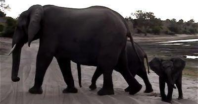 Ihr wolltet schon immer mal wissen, wie es sich anhört, wenn Elefanten niesen?