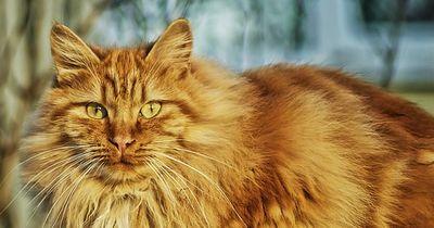 Wenn Katzen dick werden