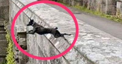 Von dieser Brücke in Schottland stürzen sich Hunde in den Tod!