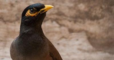 Beo, der sprechende Vogel, sorgt für Heiterkeit