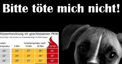 Endlich ist es Gesetz: So viel zahlen Hundebesitzer, die ihren Vierbeiner bei dieser Hitze...
