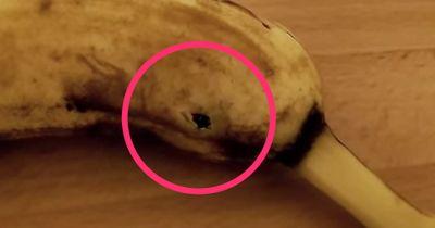Fake oder real? Ihr werdet nicht glauben, was gleich aus dieser Banane platzt!