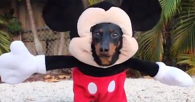 Die coolsten Hundekostüme