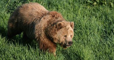 Was tut man, wenn ein Bär vor dem eigenen Fenster auftaucht?