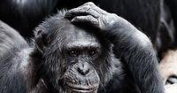 Affen streiten wie Menschen