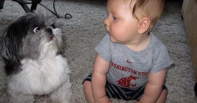 Wenn Babies mit Hunden aufwachsen