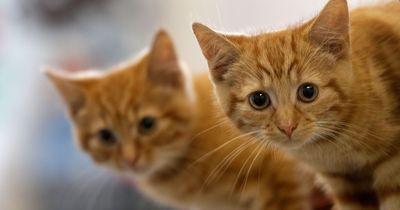 Eine Katze mit einem großen Herz!