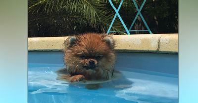 8 Hunde, die genug von der Hitze haben!