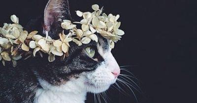 8 Katzen, die den Sommer rocken!