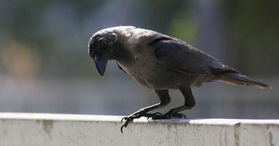 Dieses Tier ist echt umweltbewusst!