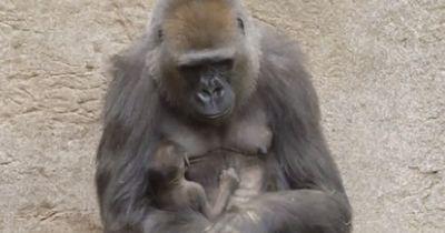 Sie hatten keine andere Wahl, als ihr das todkranke Baby wegzunehmen...