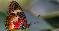 Schmetterlinge in allen Farben und Formen