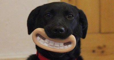 Hunde lieben ihr Spielzeug - Lächeln garantiert!