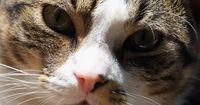 Mythen über Katzen