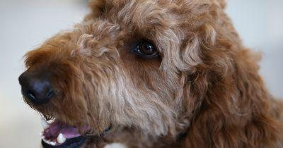 5 Sportarten, die du gemeinsam mit deinem Hund betreiben kannst