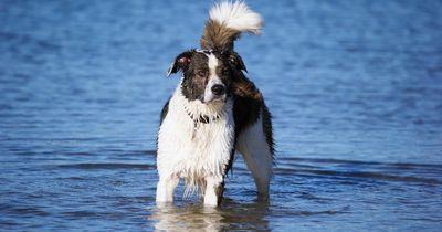 Ein Hund, der es liebt, sich abzutrocken!