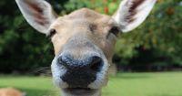 Tiere sind neugierig wie wir Menschen