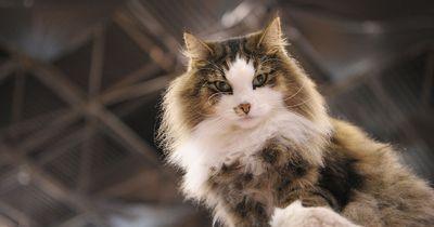 5 Dinge, die jeder Katzen-Besitzer wahrscheinlich schon getan hat