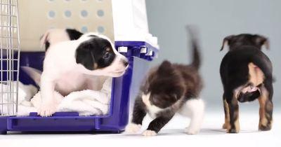 Welpen und Katzenbabys treffen aufeinander - so niedlich!