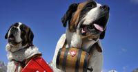 Rettungshunde sind Helfer in der Not