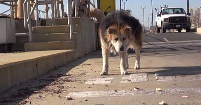 Mufasa: Dieser Hund stand kurz vor dem Tod!