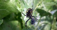 7 Gründe, warum Du vor Spinnen Angst haben solltest
