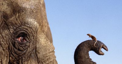 Maus und Elefant sind wie Feuer und Wasser