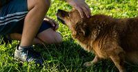 Die Tiere sind meistens völlig harmlos..