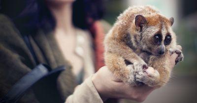 Nur sehr wenige Menschen wissen über die Giftigkeit dieser Tiere bescheid!