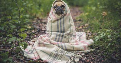 Tipps gegen die Hitze für eure Tiere
