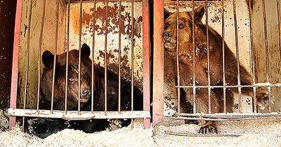Freiheit für zwei Käfigbären