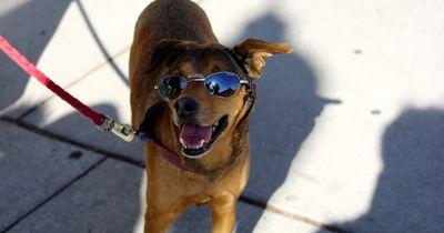So machst du die Hitze für deinen Hund erträglicher