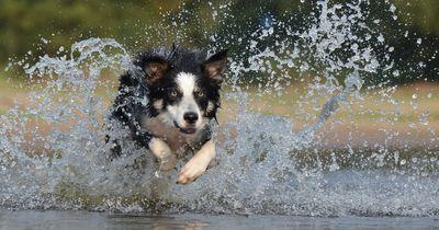 Die 10 beliebtesten Hundenamen in Deutschland!