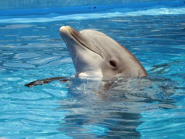 Coolstes Lieblingsessen des kleinen Delfins!