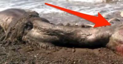 Seltsame Kreatur an Russlands Küste gespült